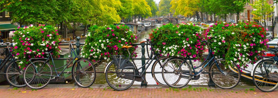 Sklepy internetowe z rowerami holenderskimi